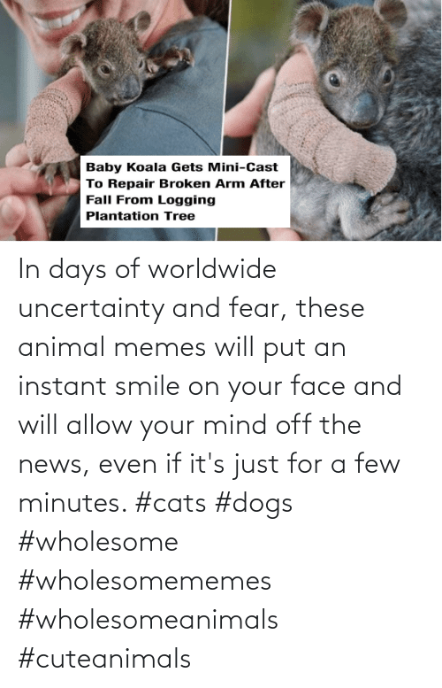 Smile: In days of worldwide uncertainty and fear, these animal memes will put an instant smile on your face and will allow your mind off the news, even if it's just for a few minutes. #cats #dogs #wholesome #wholesomememes #wholesomeanimals #cuteanimals