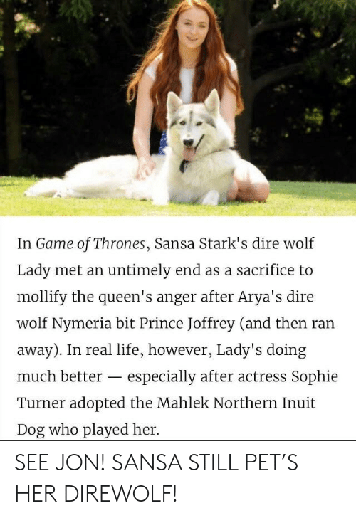dire wolf: In Game of Thrones, Sansa Stark's dire wolf  Lady met an untimely end as a sacrifice to  mollify the queen's anger after Arya's dire  wolf Nymeria bit Prince Joffrey (and then ran  away). In real life, however, Lady's doing  much better - especially after actress Sophie  Turner adopted the Mahlek Northern Inuit  Dog who played her. SEE JON! SANSA STILL PET'S HER DIREWOLF!