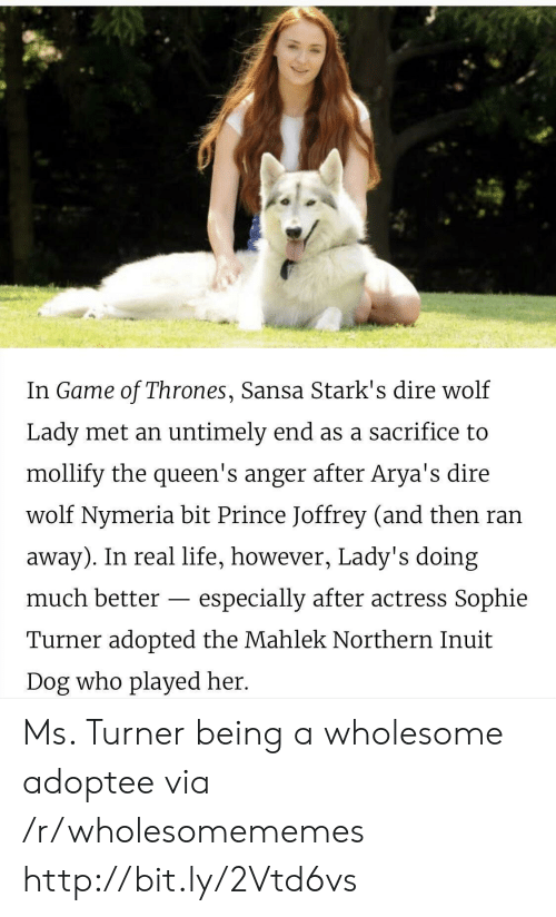 Northern Inuit Dog: In Game of Thrones, Sansa Stark's dire wolf  Lady met an untimely end as a sacrifice to  mollify the queen's anger after Arya's dire  wolf Nymeria bit Prince Joffrey (and then ran  away). In real life, however, Lady's doing  much better  especially after actress Sophie  Turner adopted the Mahlek Northern Inuit  Dog who played her. Ms. Turner being a wholesome adoptee via /r/wholesomememes http://bit.ly/2Vtd6vs