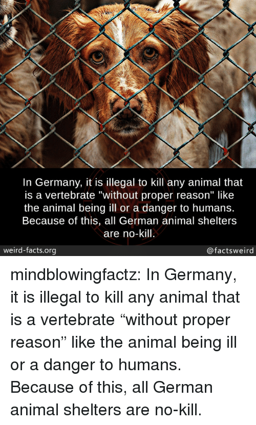 """Shelters: In Germany, it is illegal to kill any animal that  is a vertebrate """"without proper reason"""" like  the animal being ill or a danger to humans.  Because of this, all German animal shelters  are no-kill  weird-facts.org  @factsweird mindblowingfactz:  In Germany, it is illegal to kill any animal that is a vertebrate """"without proper reason"""" like the animal being ill or a danger to humans. Because of this, all German animal shelters are no-kill."""