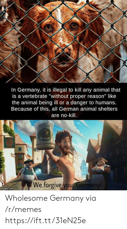 "Memes, Animal, and Germany: In Germany, it is illegal to kill any animal that  is a vertebrate ""without proper reason"" like  the animal being ill or a danger to humans.  Because of this, all German animal shelters  are no-kill.  We forgive you Germany!  imgflip.com Wholesome Germany via /r/memes https://ift.tt/31eN25e"