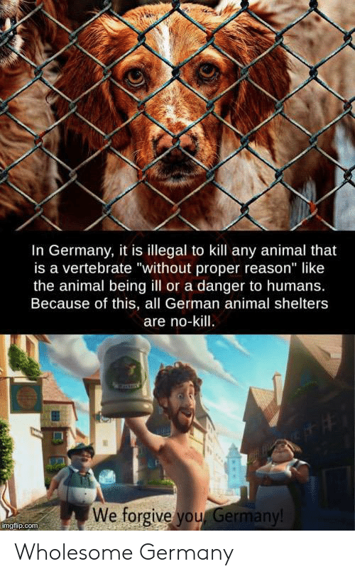 """Shelters: In Germany, it is illegal to kill any animal that  is a vertebrate """"without proper reason"""" like  the animal being ill or a danger to humans.  Because of this, all German animal shelters  are no-kill.  We forgive you Germany!  imgflip.com Wholesome Germany"""