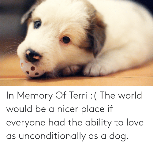 Terri: In Memory Of Terri :( The world would be a nicer place if everyone had the ability to love as unconditionally as a dog.