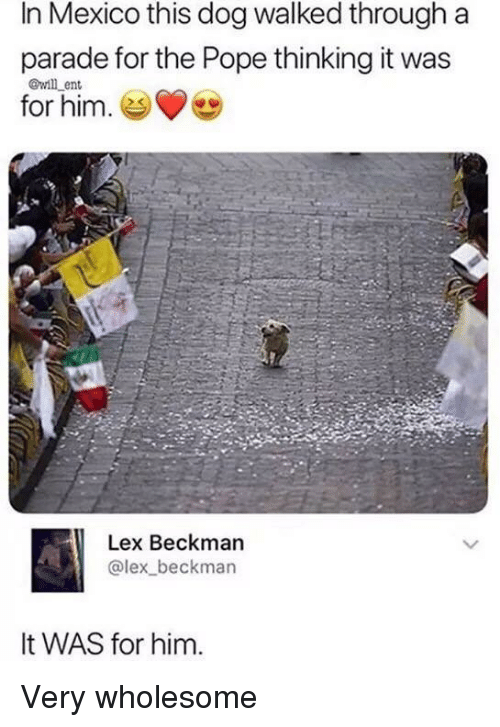 Pope Francis, Mexico, and Wholesome: In Mexico this dog walked through a  parade for the Pope thinking it was  for him. es  @will ent  Lex Beckman  @lex beckman  It WAS for him. Very wholesome