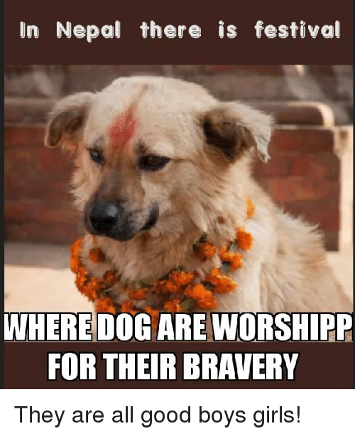 Girls, Good, and Nepal: In Nepal there is festival  WHERE DOG ARE WORSHIPP  FOR THEIR BRAVERY They are all good boys  girls!