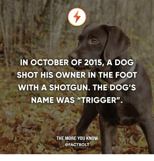 "Triggere: IN OCTOBER OF 2015, A DOG  SHOT HIS OWNER IN THE FOOT  WITH A SHOTGUN. THE DOG'S  NAME WAS ""TRIGGER"".  THE MORE YOU KNOW  @FACTBOLT"