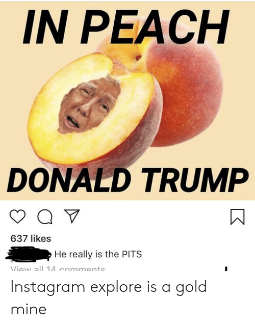 Donald Trump, Instagram, and Trump: IN PEACH  DONALD TRUMP  637 likes  He really is the PITS Instagram explore is a gold mine