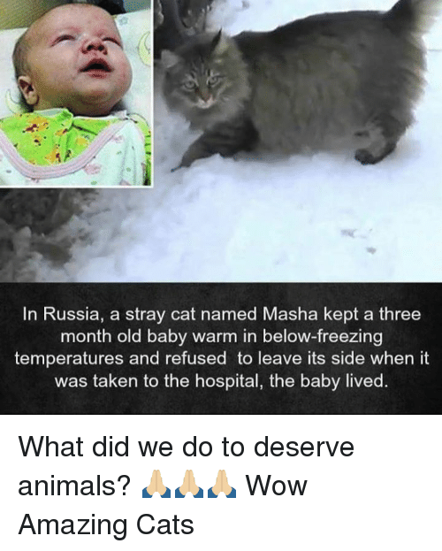 stray cats: In Russia, a stray cat named Masha kept a three  month old baby warm in below-freezing  temperatures and refused to leave its side when it  was taken to the hospital, the baby lived. What did we do to deserve animals? 🙏🏼🙏🏼🙏🏼  Wow Amazing Cats