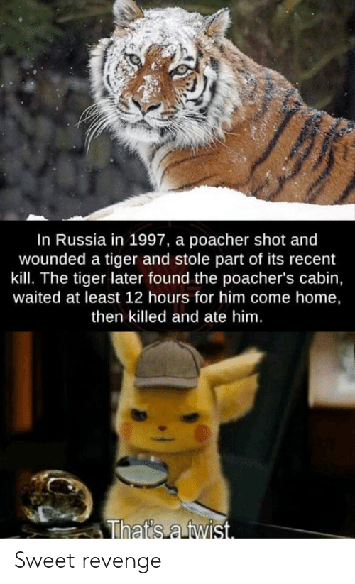 Sweet Revenge: In Russia in 1997, a poacher shot and  wounded a tiger and stole part of its recent  kill. The tiger later found the poacher's cabin,  waited at least 12 hours for him come home,  then killed and ate him.  That's a twist. Sweet revenge