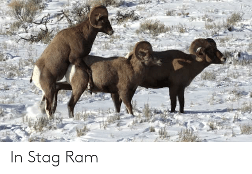 Punny: In Stag Ram