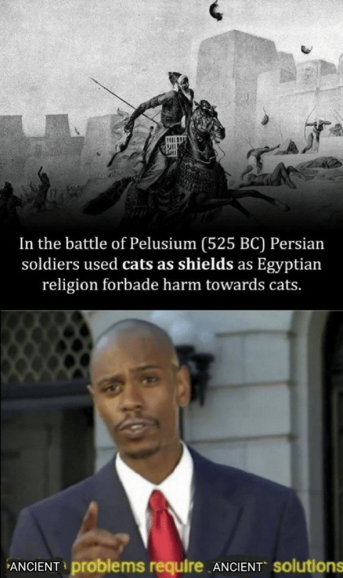 Cats, Soldiers, and Persian: In the battle of Pelusium (525 BC) Persian  soldiers used cats as shields as Egyptian  religion forbade harm towards cats.  ANCIENT problems require ANCIENT solutions