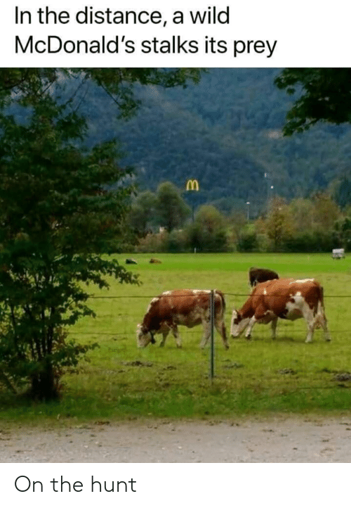 Funny, McDonalds, and Wild: In the distance, a wild  McDonald's stalks its prey On the hunt
