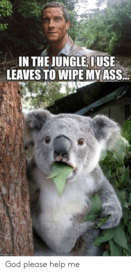 wipe: IN THE JUNGLE, IUSE  LEAVES TO WIPE MY ASS..  imgflip.com God please help me