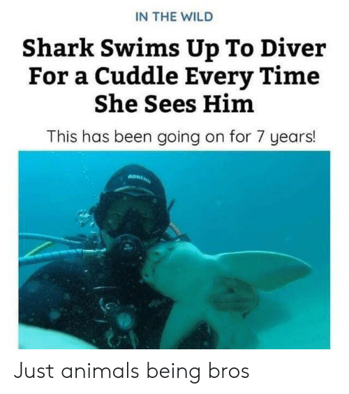 Animals, Animals Being Bros, and Shark: IN THE WILD  Shark Swims Up To Diver  For a Cuddle Every Time  She Sees Him  This has been going on for 7 years! Just animals being bros