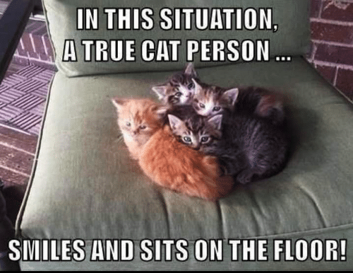 Memes, True, and Smiles: IN THIS SITUATION  A TRUE CAT PERSON.  SMILES AND SITS ON THE FLOOR!