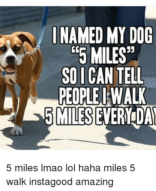 Hahae: INAMED MY DOG  5MILES  SOI CAN TELL  PEOPLE I WALL  5 MILES EVERY DA 5 miles lmao lol haha miles 5 walk instagood amazing