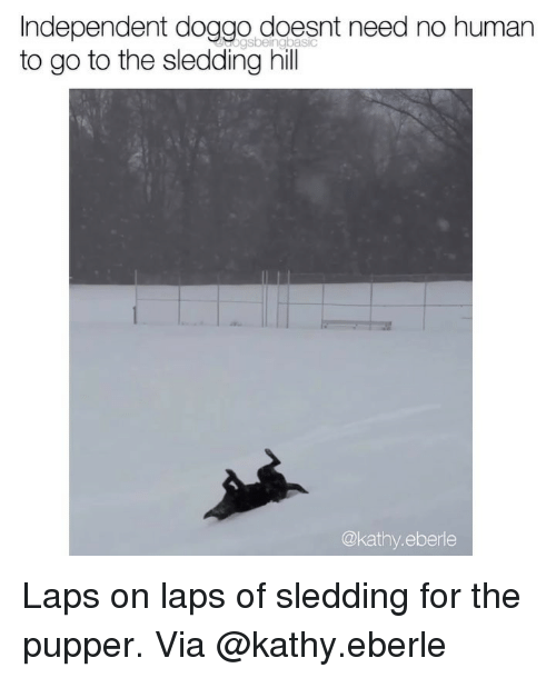 Memes, 🤖, and Doggo: Independent doggo doesnt need no humarn  to go to the sledding hill  @kathy.eberle Laps on laps of sledding for the pupper. Via @kathy.eberle