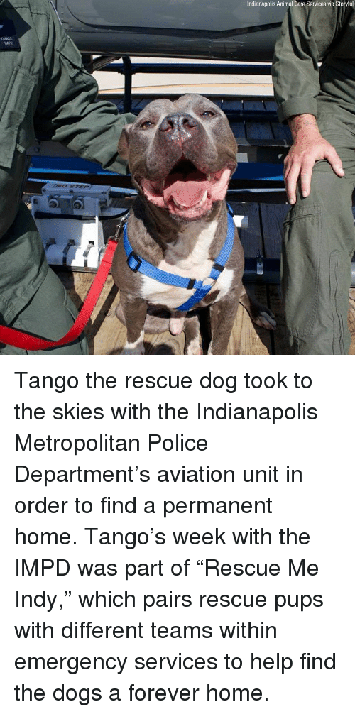 "Dogs, Memes, and Police: Indianapolis Animal Care Services via Storyful  MPD Tango the rescue dog took to the skies with the Indianapolis Metropolitan Police Department's aviation unit in order to find a permanent home. Tango's week with the IMPD was part of ""Rescue Me Indy,"" which pairs rescue pups with different teams within emergency services to help find the dogs a forever home."