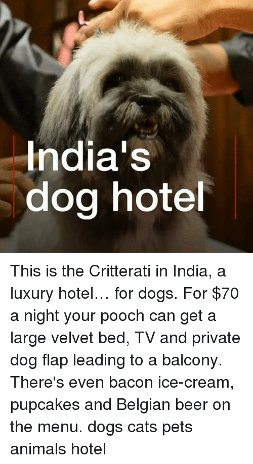 pooch: India's  dog hote This is the Critterati in India, a luxury hotel… for dogs. For $70 a night your pooch can get a large velvet bed, TV and private dog flap leading to a balcony. There's even bacon ice-cream, pupcakes and Belgian beer on the menu. dogs cats pets animals hotel