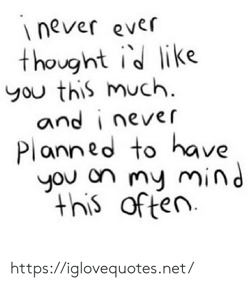 Mind, Never, and Thought: inever ever  thought id like  you this much.  and i never  Planned to have  you on my mind  this often https://iglovequotes.net/