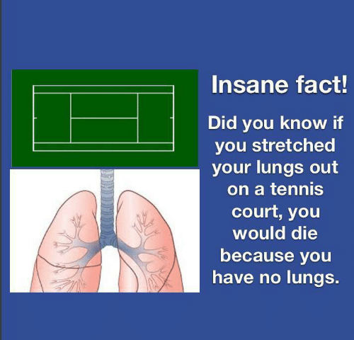 Tennis, Did, and You: Insane fact!  Did you know if  you stretched  your lungs out  on a tennis  court, you  would die  because you  have no lungs.