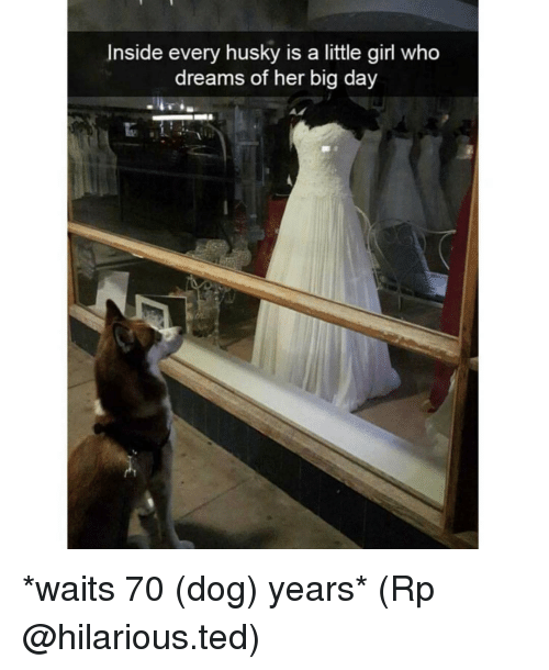 dog years: Inside every husky is a little girl who  dreams of her big day *waits 70 (dog) years* (Rp @hilarious.ted)