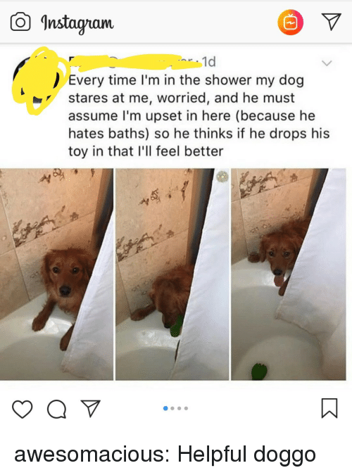 "Baths: Instagam  1d  Every time I'm in the shower my dog  stares at me, worried, and he must  assume l'm upset in here (because he  hates baths) so he thinks if he drops his  toy in that I'll feel better  yaV"" awesomacious:  Helpful doggo"