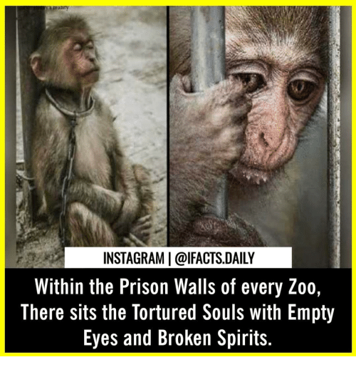 Instagram, Memes, and Prison: INSTAGRAM | @lFACTS.DAILY  Within the Prison Walls of every Zoo  There sits the Tortured Souls with Empty  Eyes and Broken Spirits.