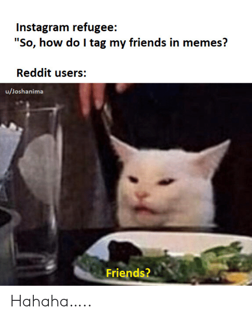 "Friends, Instagram, and Memes: Instagram refugee:  ""So, how do I tag my friends in memes?  Reddit users:  u/Joshanima  Friends? Hahaha….."