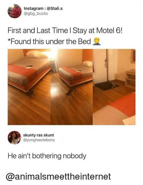 Skunt: Instagram @Stali.s  @gbg_bucks  First and Last Time l Stay at Motel 6!  *Found this under the Bed  skunty ras skunt  @yunghawtebony  He ain't bothering nobody @animalsmeettheinternet