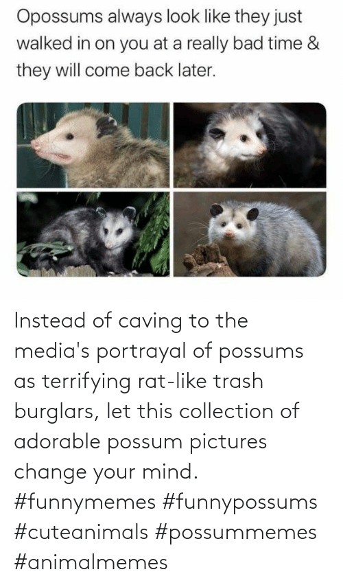 Instead Of: Instead of caving to the media's portrayal of possums as terrifying rat-like trash burglars, let this collection of adorable possum pictures change your mind. #funnymemes #funnypossums #cuteanimals #possummemes #animalmemes