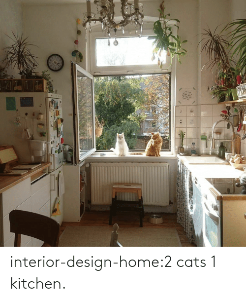 Cats: interior-design-home:2 cats 1 kitchen.