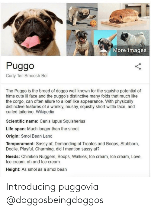 Introducing: Introducing puggovia @doggosbeingdoggos