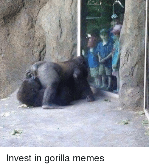 Memes, Invest, and Gorilla