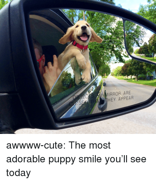adorable puppy: IRROR ARE  HEY APPEAR awwww-cute:  The most adorable puppy smile you'll see today
