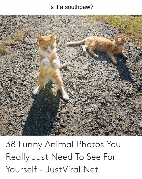funny animal: Is it a southpaw? 38 Funny Animal Photos You Really Just Need To See For Yourself - JustViral.Net
