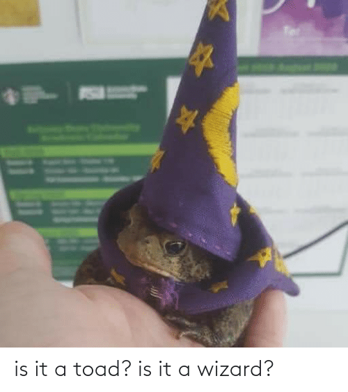 toad: is it a toad? is it a wizard?
