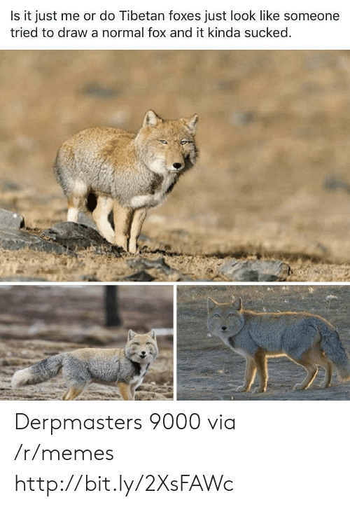 foxes: Is it just me or do Tibetan foxes just look like someone  tried to draw a normal fox and it kinda sucked. Derpmasters 9000 via /r/memes http://bit.ly/2XsFAWc