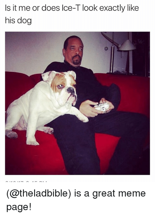 Great Meme: Is it me or does lce-T look exactly like  his dog (@theladbible) is a great meme page!