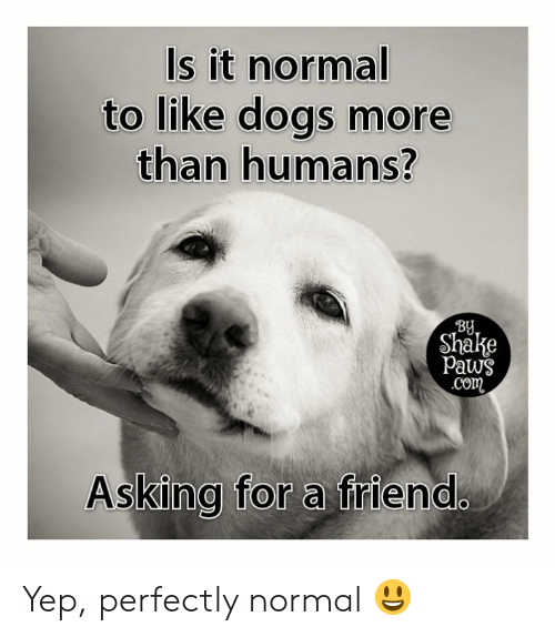 Dogs, Memes, and Asking: Is it normal  to like dogs more  than humans?  BU  Shake  Paws  com  Asking for a friend Yep, perfectly normal 😃