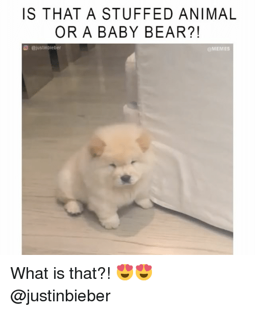 Memes, 🤖, and Baby Bear: IS THAT A STUFFED ANIMAL  OR A BABY BEAR?!  @justinbieber  eMEMES What is that?! 😍😍 @justinbieber