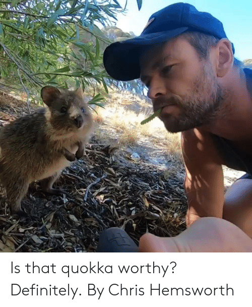 Chris Hemsworth: Is that quokka worthy? Definitely.  By Chris Hemsworth