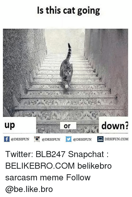 up down: Is this cat going  up  down?  or  1  @DESIFUN @DESIFUN @DESIFUN-DESIFUN.COM Twitter: BLB247 Snapchat : BELIKEBRO.COM belikebro sarcasm meme Follow @be.like.bro