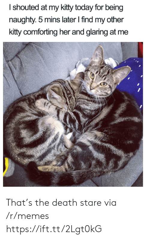 Memes, Death, and Today: Ishouted at my kitty today for being  naughty. 5 mins later I find my other  kitty comforting her and glaring at me That's the death stare via /r/memes https://ift.tt/2Lgt0kG