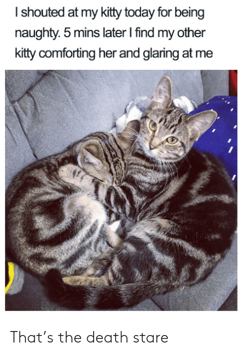 Death, Today, and Naughty: Ishouted at my kitty today for being  naughty. 5 mins later I find my other  kitty comforting her and glaring at me That's the death stare