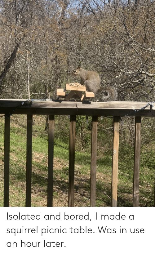 later: Isolated and bored, I made a squirrel picnic table. Was in use an hour later.