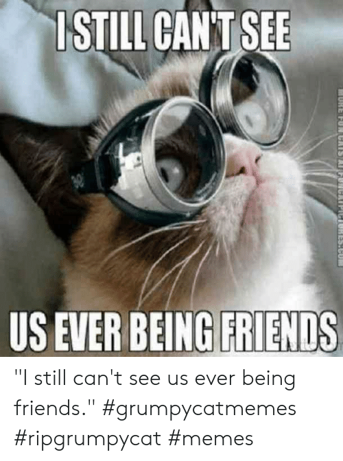"Friends, Memes, and Still: ISTILL CANT SEE  US EVER BEING FRIENDS  1ES.CU ""I still can't see us ever being friends."" #grumpycatmemes #ripgrumpycat #memes"