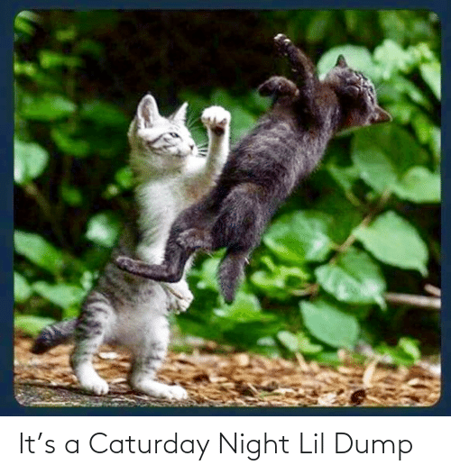 dump: It's a Caturday Night Lil Dump