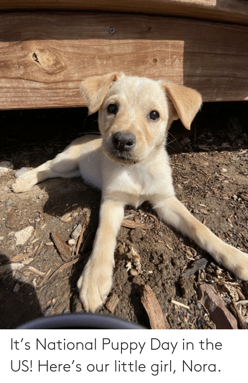 nora: It's National Puppy Day in the US! Here's our little girl, Nora.