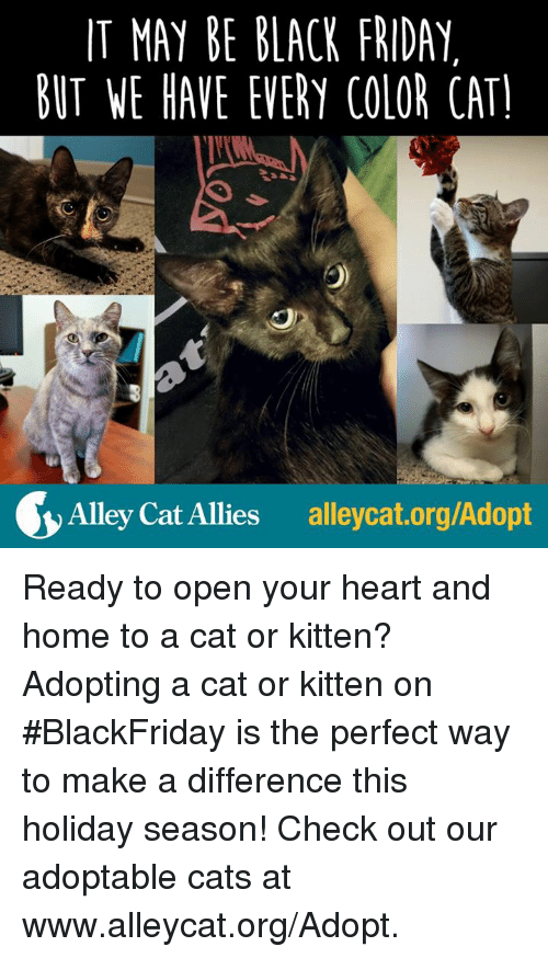 alley cats: IT MAY BE BLACK FRIDAY  BUT WE HAVE EVERY COLOR CAT!  Alley Cat Allies  alleycat.org/Adopt Ready to open your heart and home to a cat or kitten? Adopting a cat or kitten on #BlackFriday is the perfect way to make a difference this holiday season! Check out our adoptable cats at www.alleycat.org/Adopt.